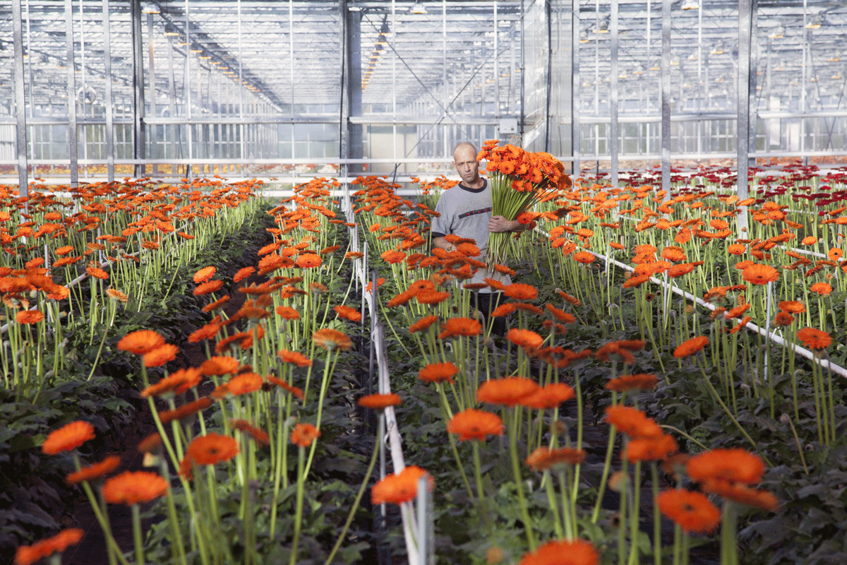 ExpatExplore_Greenhouse_Holland