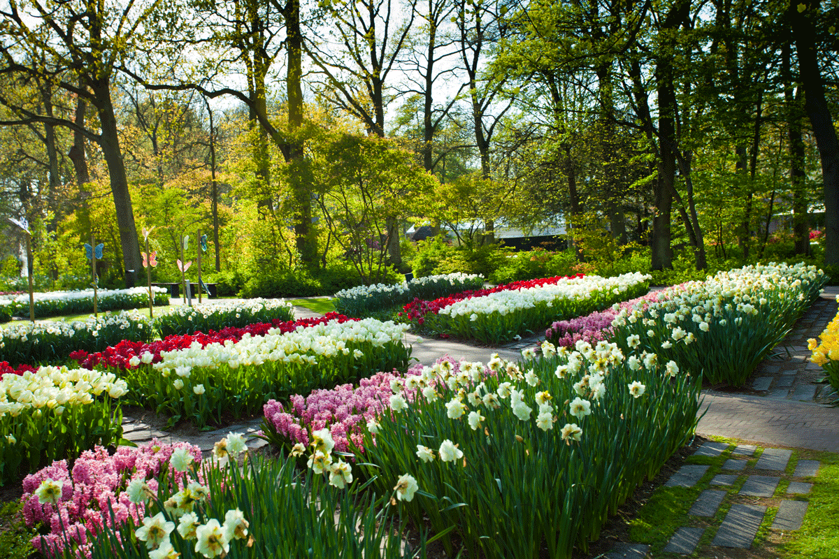 Keukenhof is simply put an explosion of colour!