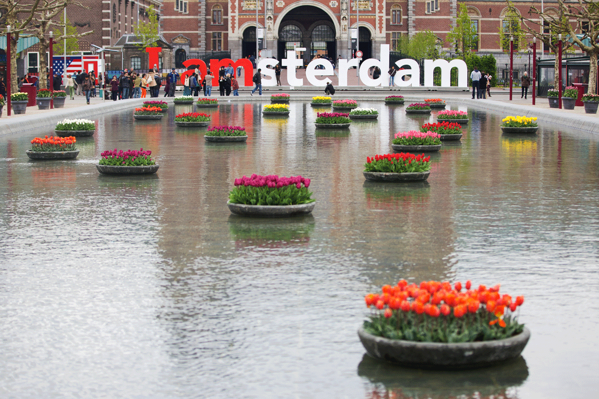 "Tulips in front of the famous ""Iamsterdam"" Sign and the Rijksmuseum."
