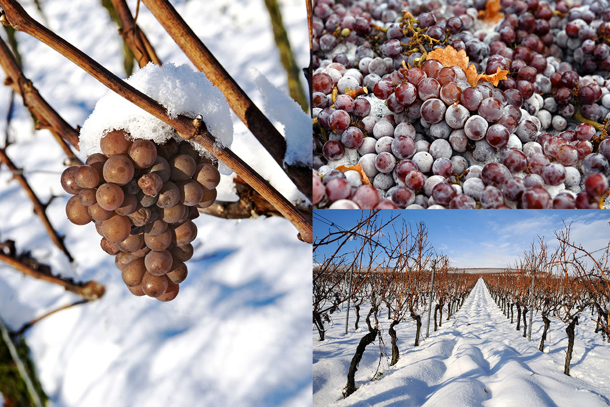 Ice_wine_Grapes