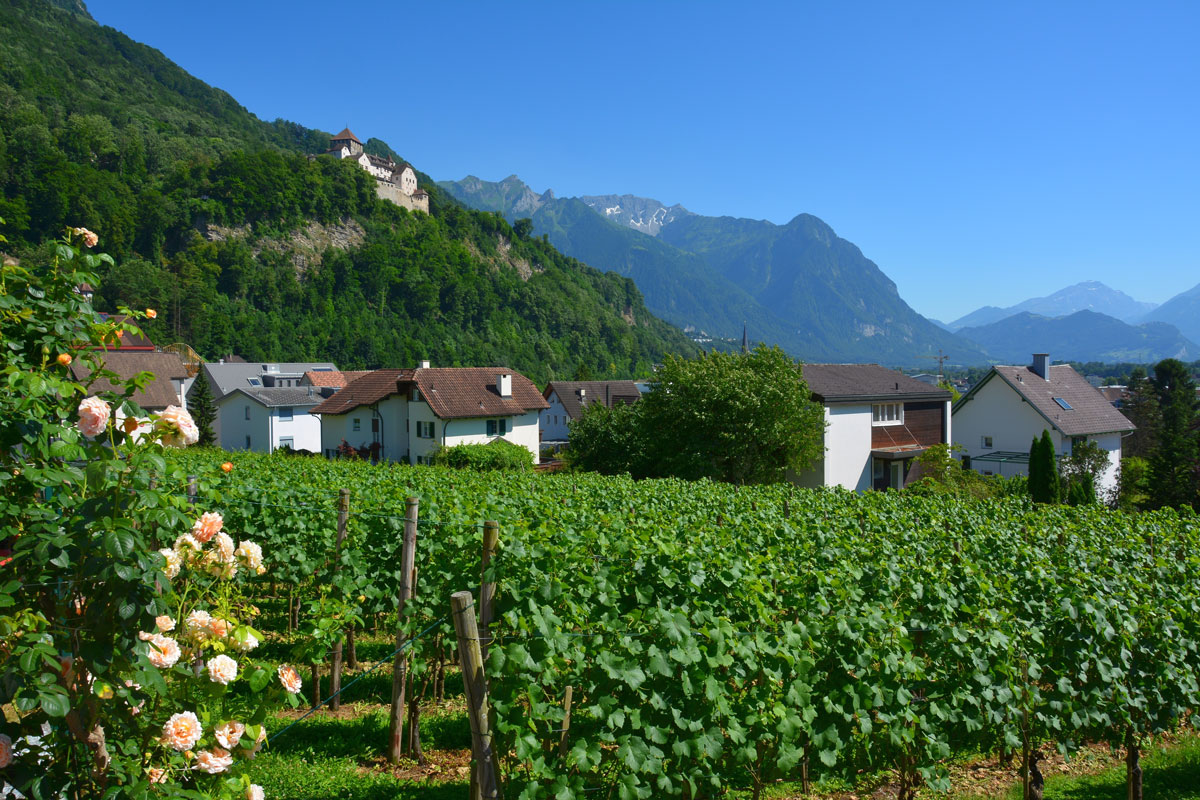 Vineyard_Liechtenstein
