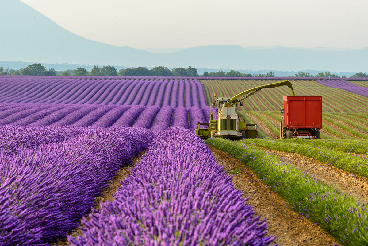 flower_fields_south_france