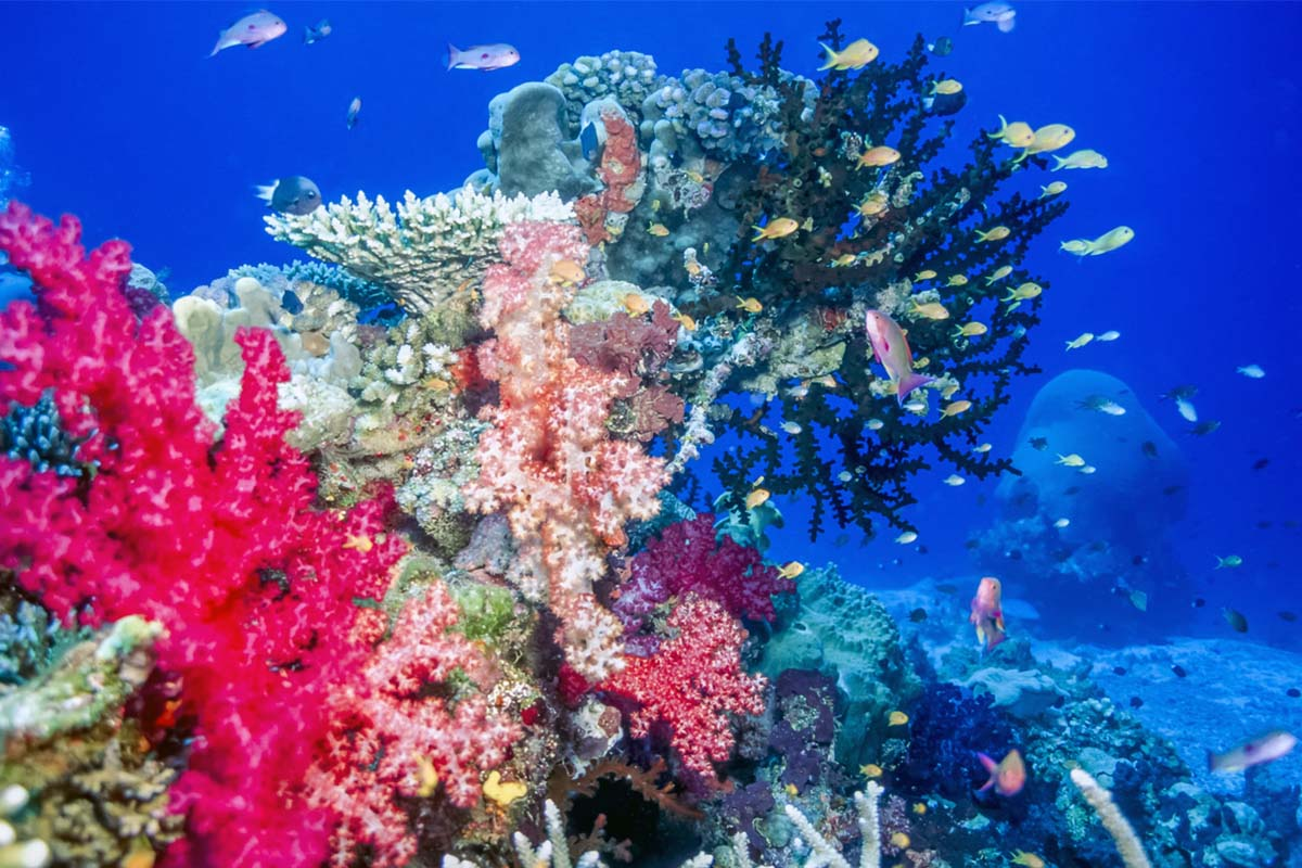 Coral reef at Taveuni Island in Fiji