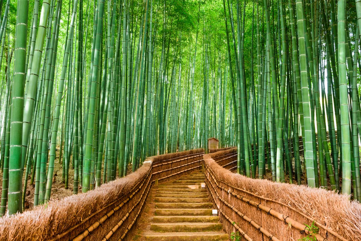 A bridge leading into the beautiful Arashiyama Bamboo Forest