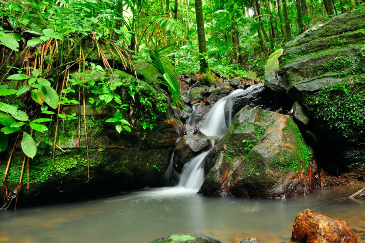 A waterfall in El Yunque Rain Forest