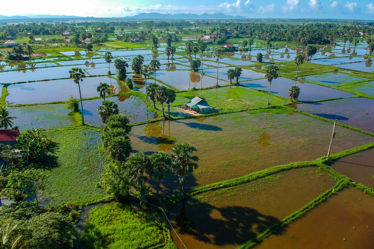 rice fields in Kampot, Cambodia
