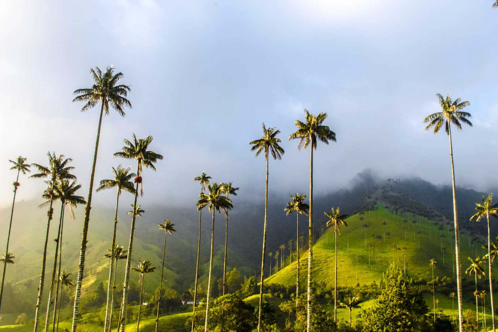 Tour the Cocora Calley