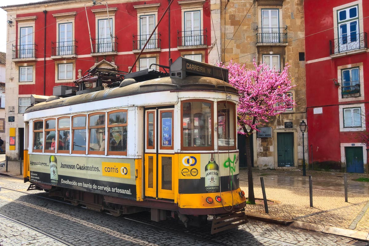 Yellow tram, symbol of Lisbon at colorful downtown street and spring blossom tree
