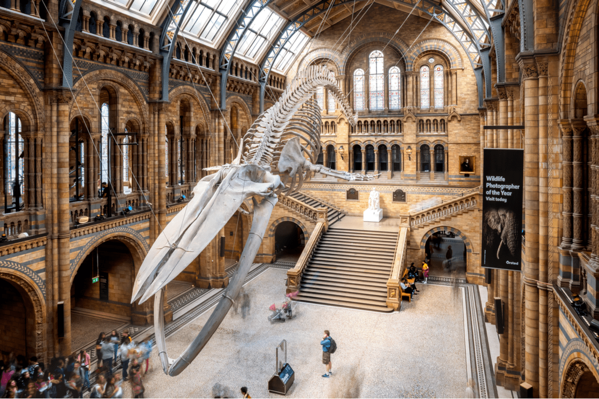 Main hall of Natural History Museum in London UK Budget travel